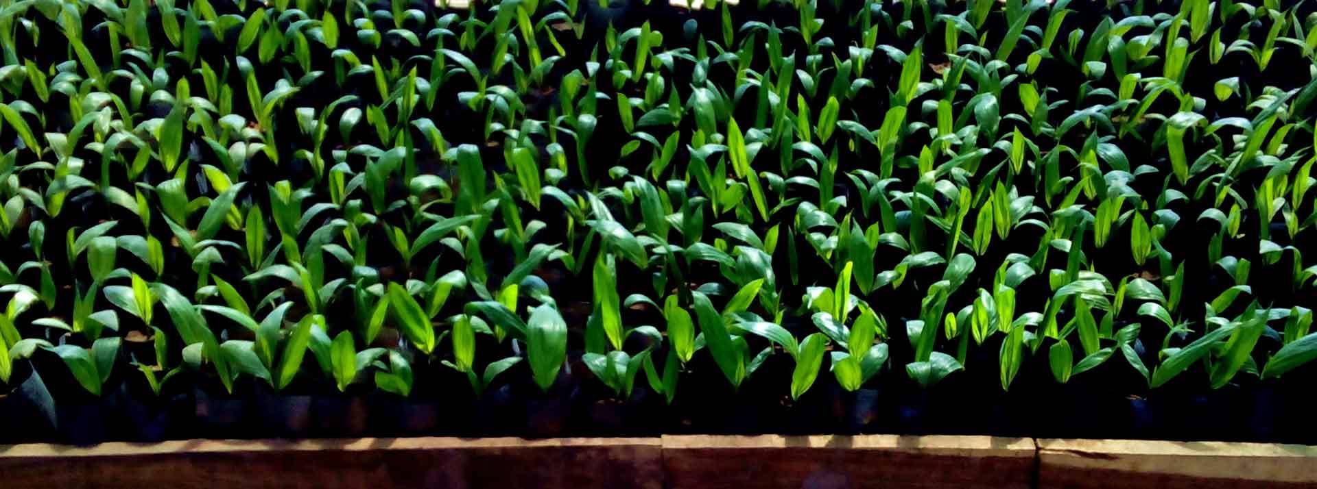 Seed Nursery